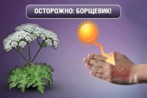 opasniy-borshhevik